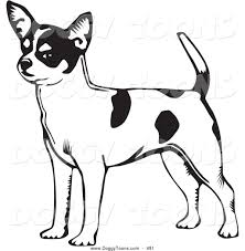 chihuahua coloring pages bing images dog patterns pinterest