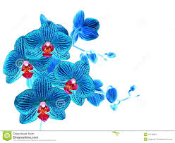 blue orchid flower blue orchid flower white isolated stock photo image 47130837