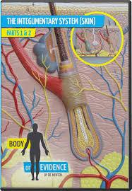 Human Anatomy Integumentary System Body Of Evidence 3 Integumentary System Skin Answers In Genesis