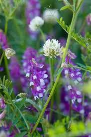 pin by tere on flores del campo pinterest flowers purple