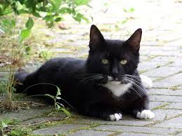 s e katzen spr che 47 besten chaton moggy kitten katze meow bilder auf