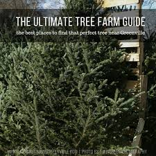 the best christmas tree farms in greenville u2013 kidding around