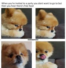 Pomeranian Meme - lol funny meme dog cute dailypicdump