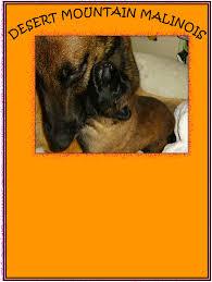 belgian sheepdog idaho home