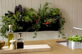 how to make mini kitchen garden with vegetables and herbs