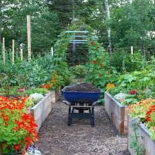 starting a home vegetable garden top easy tips ugr