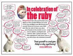 lvhouserabbitsociety bunnies easter chocolate