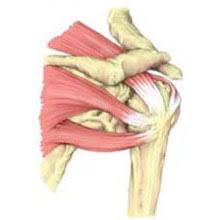 Rotator Cuff Injury From Bench Press Rotator Cuff Tear Symptoms Causes U0026 Treatment Explained