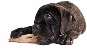 puppy raw food how to feed raw food to your dog pets