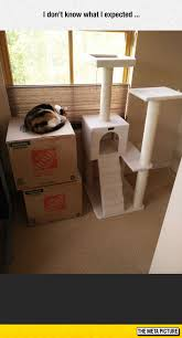 Cardboard Box Meme - cats don t care about expensive toys the meta picture