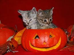 cool halloween background cute halloween kittens photos
