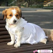 dog wedding dress wedding dress in white with veil shipping to usa and canada