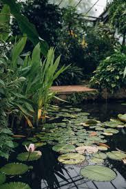 Botanic Gardens Dundee The Of Dundee Botanic Garden Dundee And Gardens