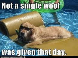 Swimming Pool Meme - pool day meme day best of the funny meme