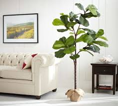 faux potted fiddle leaf tree pottery barn