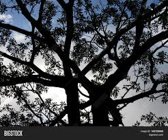 dark halloween background dark black shadow of huge tree awful halloween background stock