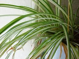 top 5 indoor plants