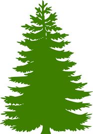 pine tree needles clipart clipground