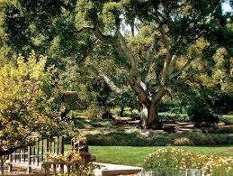 photos california backyard oak tree and backyard