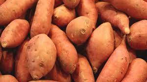 comment cuisiner patate douce comment faire pousser des patates douces en pot fruits et