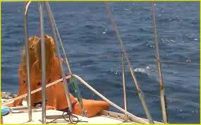 Sea Nomads Boca Del Rio Isla Margarita Venezuela