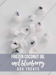 frozen coconut oil and blueberry dog treats hello nature