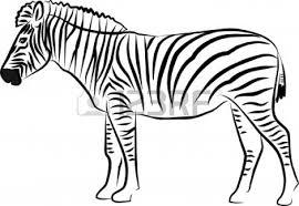 zebra color page black and white zebra clipart clipartxtras