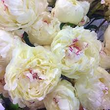 flower delivery nyc local peony season in nyc big apple florist