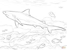realistic bull shark coloring page free printable coloring pages