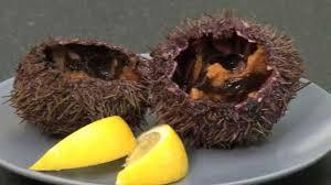 comment cuisiner des oursins comment ouvrir des oursins