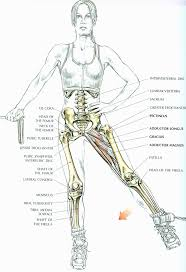 110 best detailed on muscle group you are working on images on