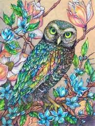 here u0027s a watercolor painting of two hawk owls by tracy lizotte to