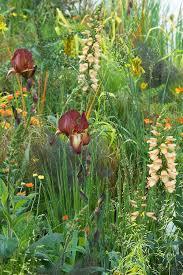 arthritis research show garden at rhs chelsea flower show 2013