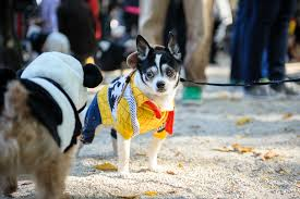 check out 2014 u0027s top pet halloween costumes according to ricky u0027s