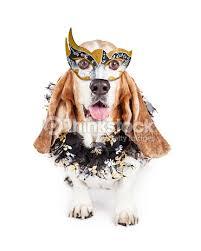 mardi gras dog mardi gras dog stock photo thinkstock