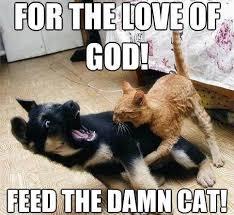 Cat And Dog Memes - image funny cat bites dog memes jpg animal jam clans wiki
