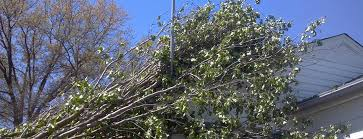 affordable tree service crossville tn knoxville lawn and tree knoxville tree and lawn service