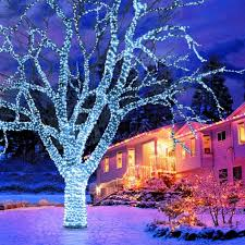 white net christmas lights in the hedges bright beautiful