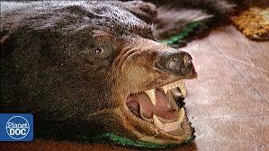 Animal Planet Documentary Grizzly Bears Full Documentaries - wild alaska part 2