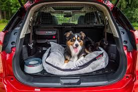 nissan almera for sale done deal nissan launches paw pack for dog owning x trail drivers parkers