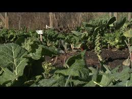 vegetable gardens mississippi state university extension service