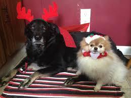 Christmas Dog Meme - christmas high definition wallpaper free download page 17