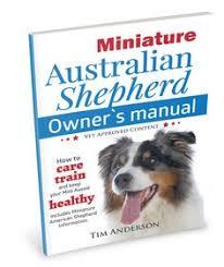 australian shepherd vs miniature american shepherd mini american shepherd miniature american shepherds