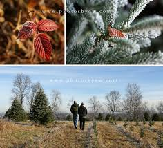 christmas tree farm pennsylvania christmas lights decoration