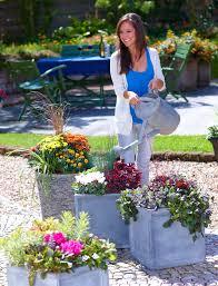 topfpflanzen balkon das grüne medienhaus pflanzen im herbst herbstdeko