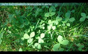 kingdom plantae facts characteristics u0026 examples video