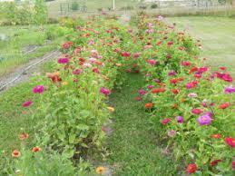 replay of 30 karen ackerman flowers galore pioneer oh