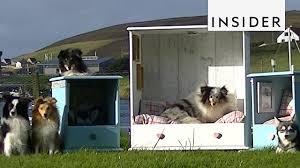 Floating Dog Bed Sheltie Shacks Turns Dressers Into Dog Beds Youtube