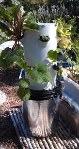 edible organic tower garden and earth garden seedlings