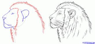 draw lion draw lions step step safari animals